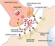NEUROTANSMISORES