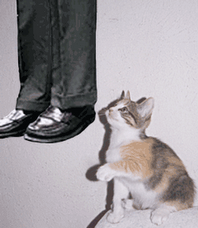 Saddam's Cat....