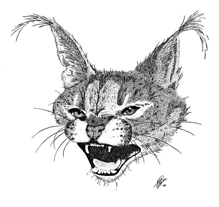 Baby lynx 1988