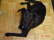 #2 Dog - Cleo