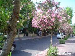 Tel Aviv - calle primaveral