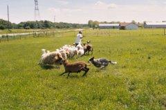 Zip Herding
