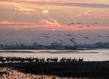Cranes on the Platte