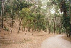 Una fotografía del bosque de Miramar, Costa Atlántica, Buenos Aires, Argentina