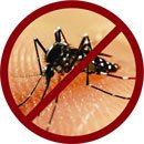 "Stop Dengue - Since we can""t stop G8 Summits"