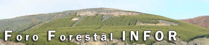 Foro Forestal INFOR
