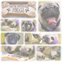 "Porky""s First B-Day"
