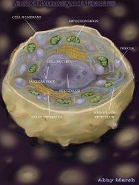 Modelo de una célula animal