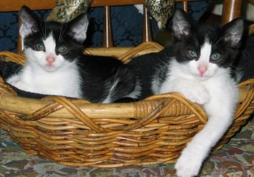 Tucker and Otis