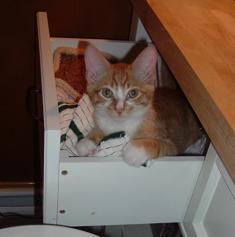 The Drawer Kitty