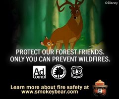 Only YOU can provent forest fires.