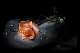 Uma Rosa para cada uma das Leitoras!