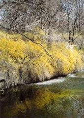 Primavera En NJ