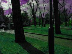 Park w Sydney