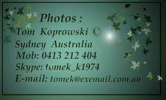 TOMEK KOPROWSKI Foto