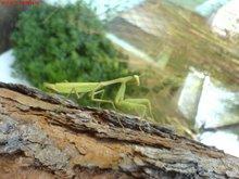 insecto fantástico... principios en duda