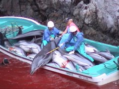 Chacina a golfinhos...