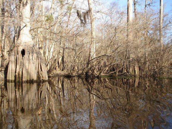 Ebeneezer Creek, Springfield GA