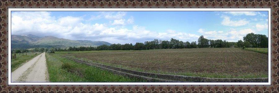 POYALES DEL HOYO - Cultivo de maiz