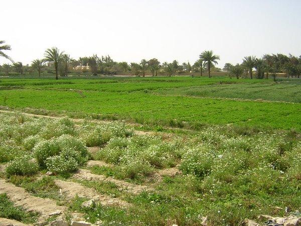 Fayoum 4