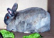 Rabbit Number One