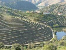Douro vinhateiro