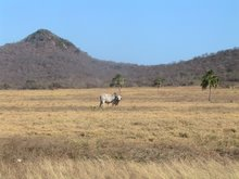 Orinoco Plains meets foothills