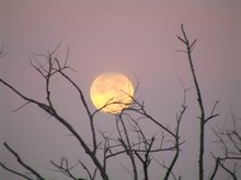 Setting Moon, Santa Maria