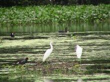 Maracaibo Wetlands