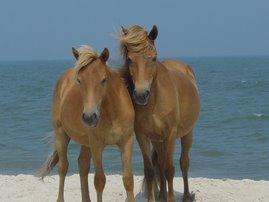 horseys