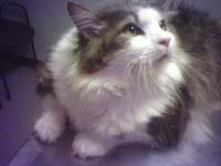 Pastor Eddie's Cat, Jack.
