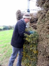 National Trust countryside manager for the Lizard lends a hand