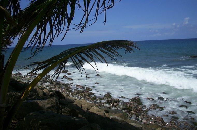 """Grand"""" Rivière - Martinique"""