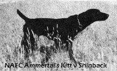 NAFC Ammertal's Kitt v Shinback