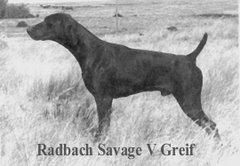 Radbach Savage v Greif