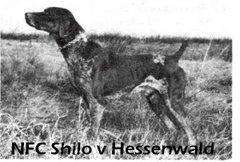 NFC Shilo v Hessenwald