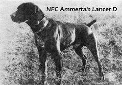 NFC Ammertal's Lancer D