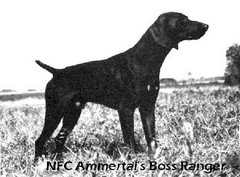 NFC Ammertal's Boss Ranger