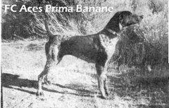 FC Aces Prima Banane