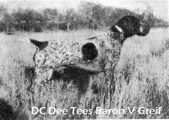DC Dee Tees Baron v Greif