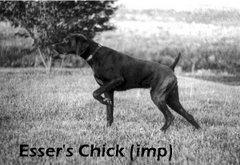 Esser's Chick