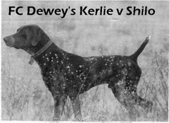 FC Dewey's Kerlie v Shilo