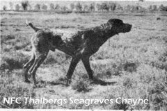NFC Thalberg's Seagraves Chayne