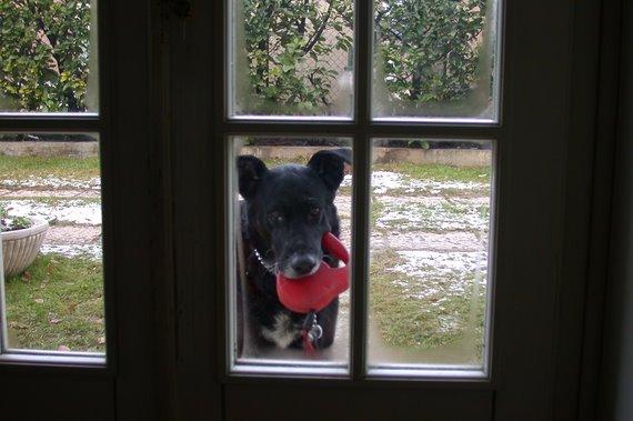Il mio più grande interesse è il mio cucciolo : Brutus