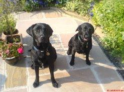 Gordon & Lucy-Piglet