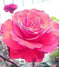 Flores que a cada passo se cruzam no meu caminho...
