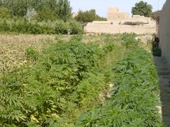 God Bless the Farmers of Afghanistan!