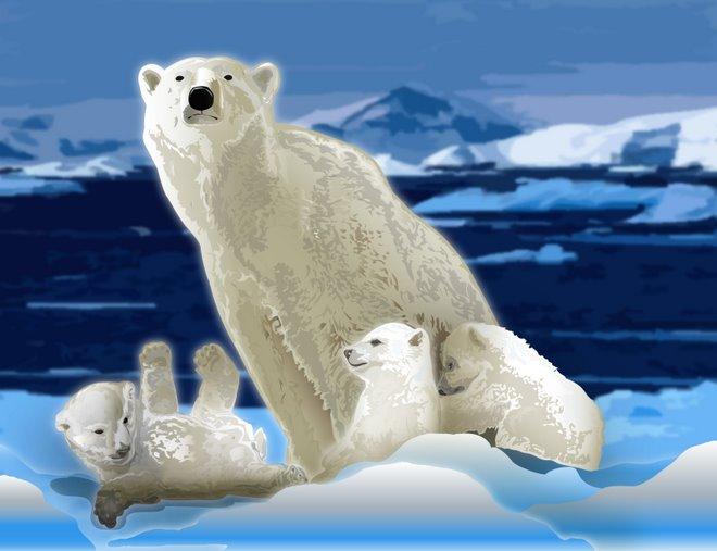 Polar mom