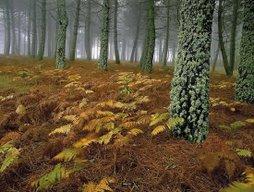 bosque de cuentos
