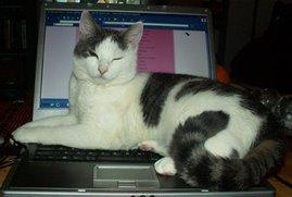 Shiva på och i datorn